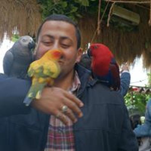 Mohamed Elshafie's avatar