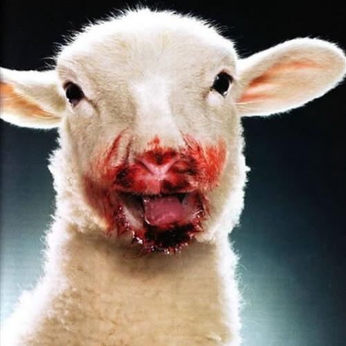 Lamb Chopz's avatar