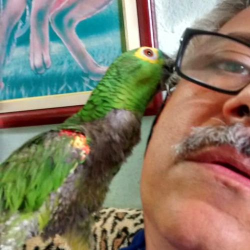 Luiz Lula's avatar