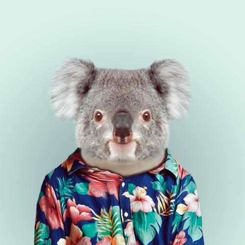 Tim Groves's avatar