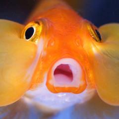 Ebenezer Fish