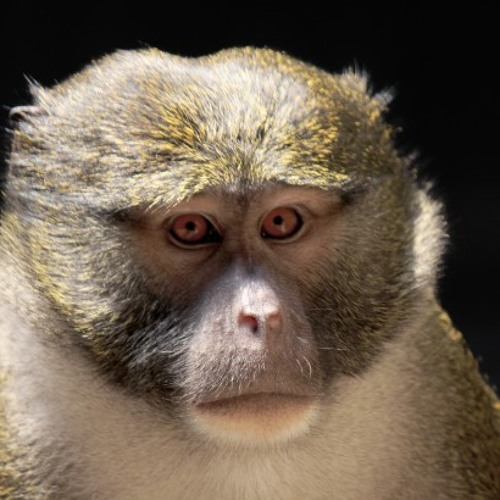 Monkey Sea's avatar