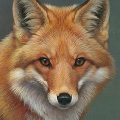 TIGO's avatar