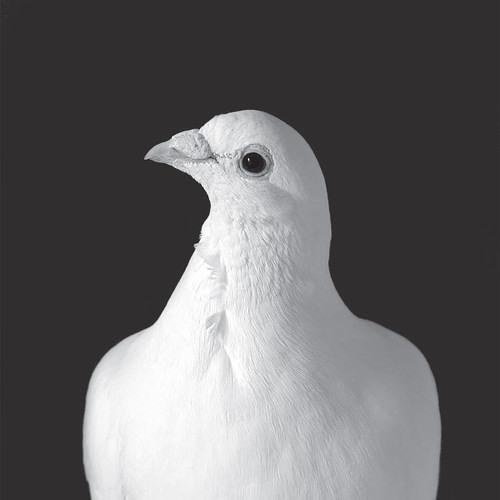 Stanislava D.A.'s avatar