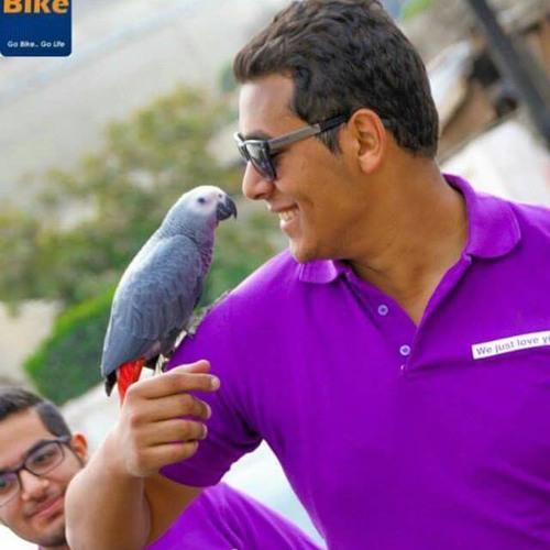 Ahmed Mamdouh Abdallah's avatar