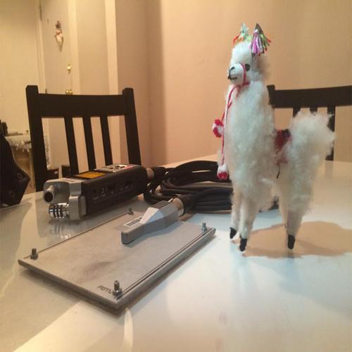 Alpaca Party's avatar