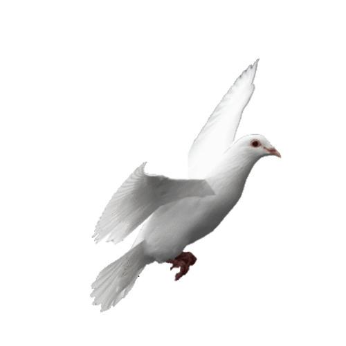 Sarah Skiebe's avatar