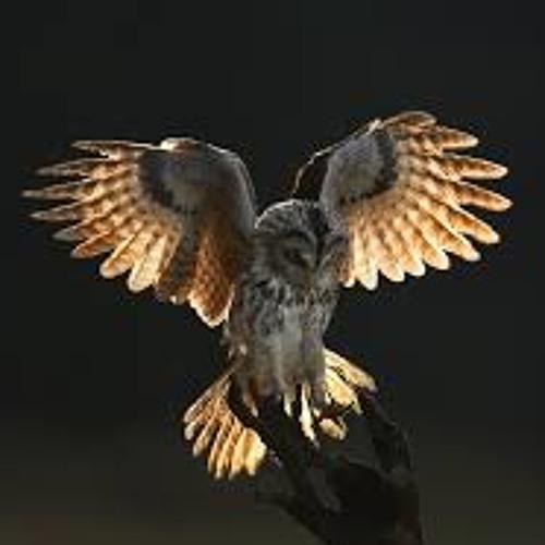 Black Bird of Pray's avatar