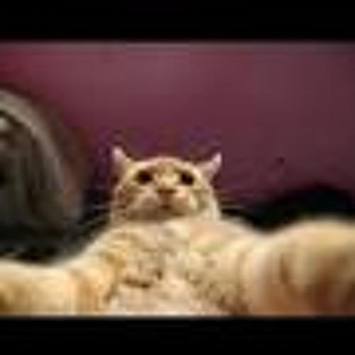 ..::Gato::..'s avatar