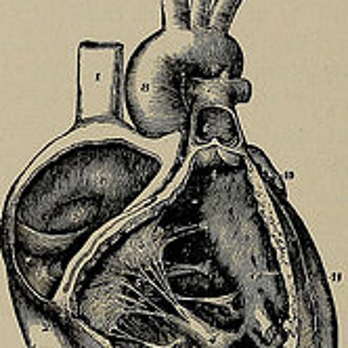 tricuspid paracardiac CT's avatar