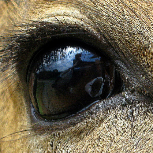 Knew eye deer's avatar