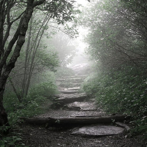 The Misty Garden's avatar