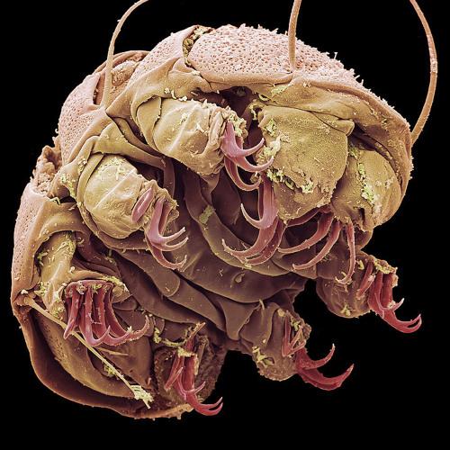 Æthereal Arthropod's avatar
