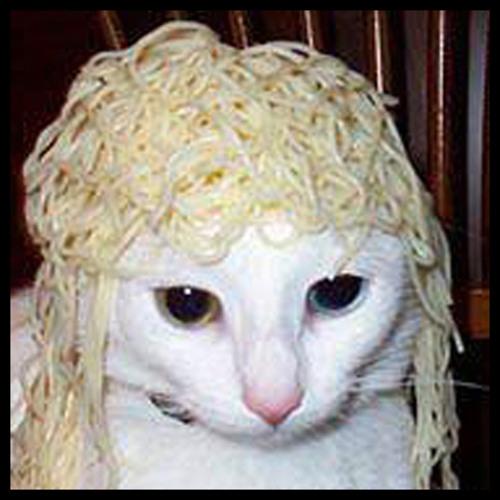noodle6491's avatar
