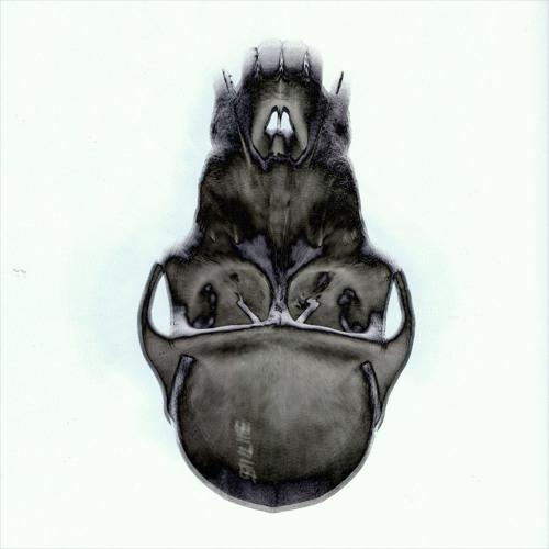 dylanbakker's avatar