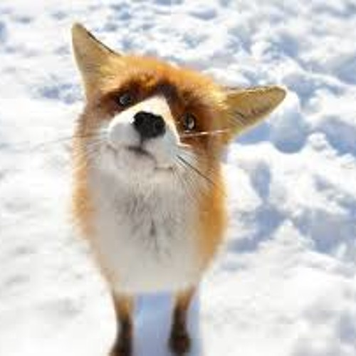 HyperActiveFox's avatar