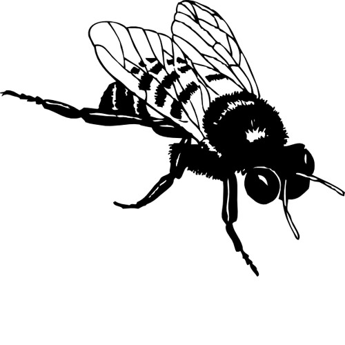 The Bumble Buzz's avatar