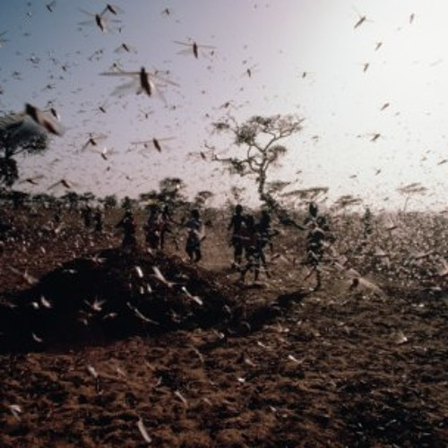 LOCUSTS FROM NOWHEN's avatar