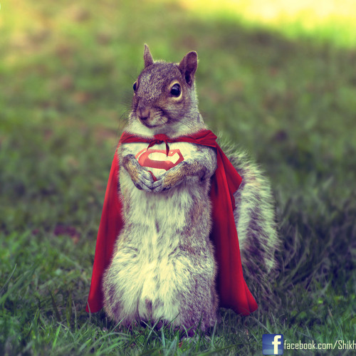 squirral's avatar