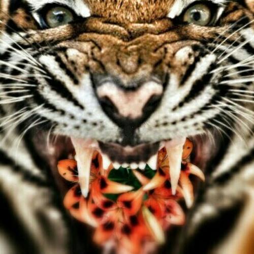 tiger_lily_atx's avatar