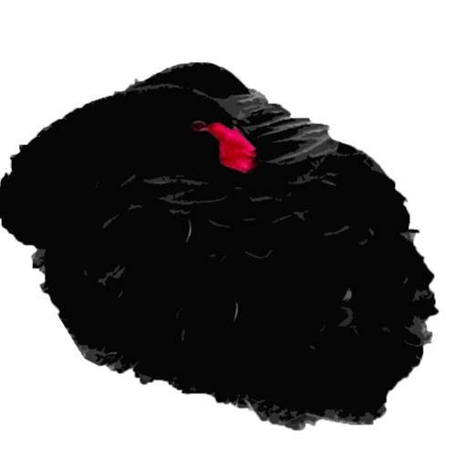 Cygnus Noir's avatar
