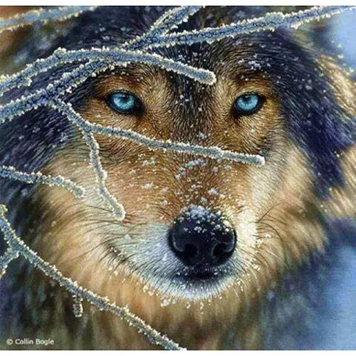 Running Wolf's avatar