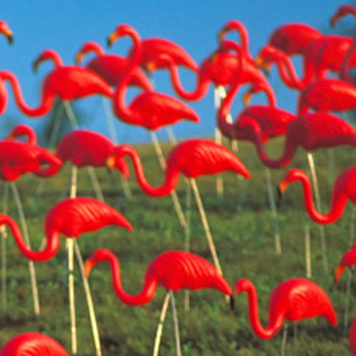 Flamingo Heat's avatar