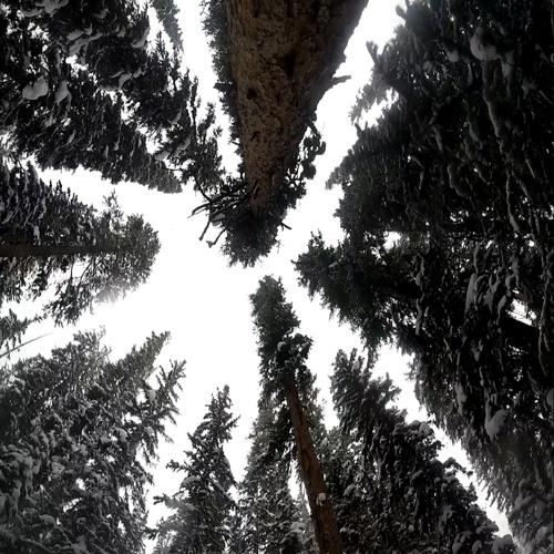 theatxconnect's avatar