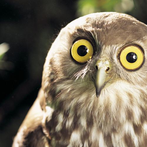 owlman31k's avatar