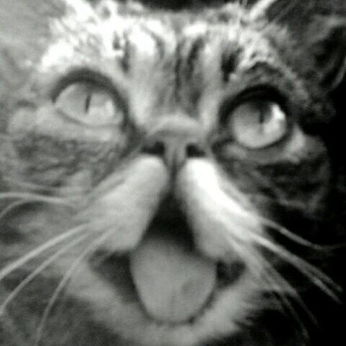 Roger Land's avatar