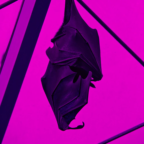 BAT CULTURE's avatar