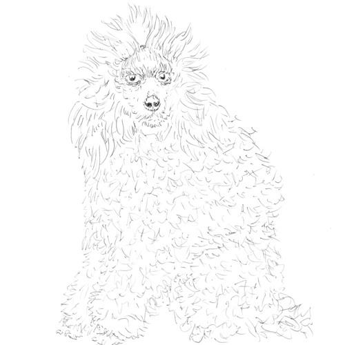 borrobo's avatar