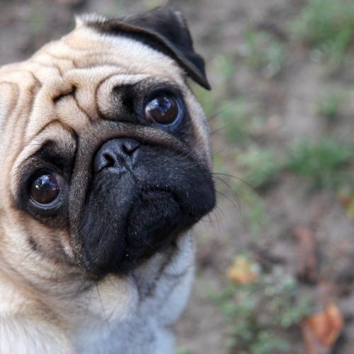_PugNation_'s avatar