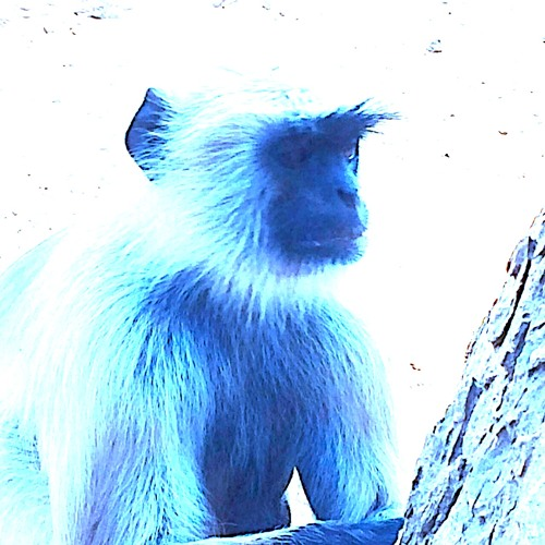 Andreas F-Blue Monkey's avatar