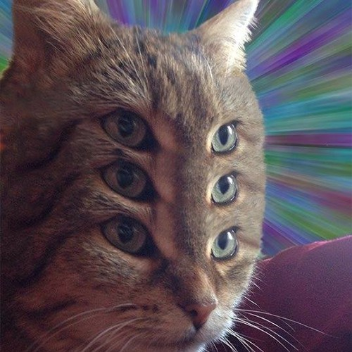 paradise4's avatar