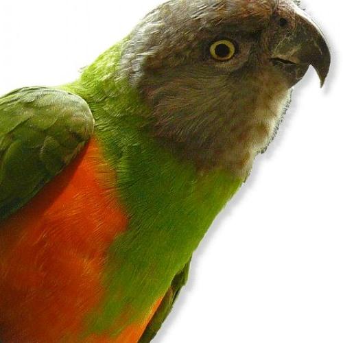 Parrot of Pop Music's avatar
