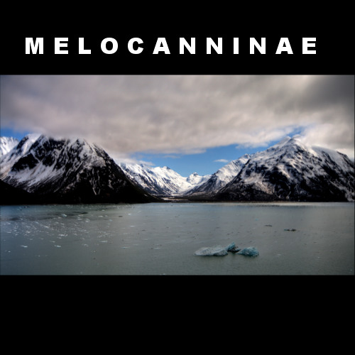 Melocanninae's avatar