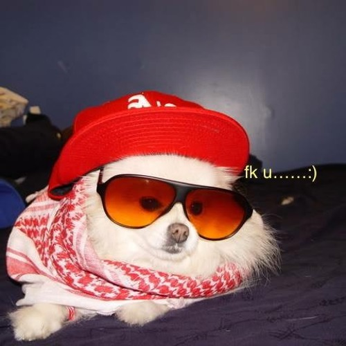 KUSHPUPPY's avatar