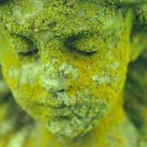 Moss Terrain Project's avatar