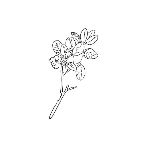 foner's avatar