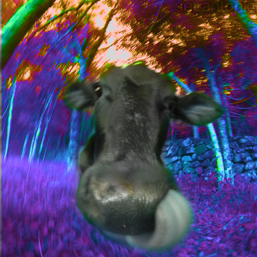 seuantonio's avatar