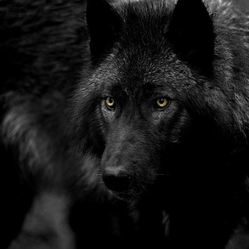 Wolf_Trap's avatar