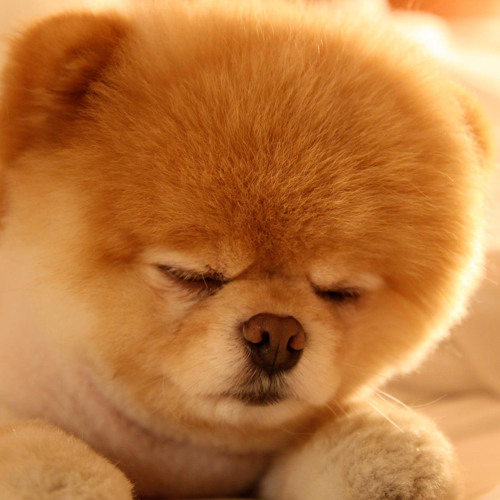 Broki's Dog's avatar