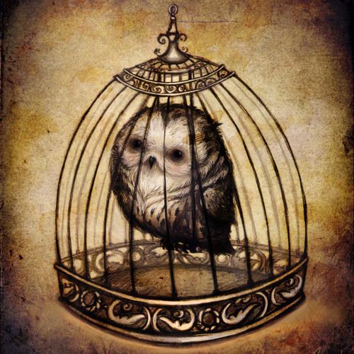 Owl's Shadow's avatar