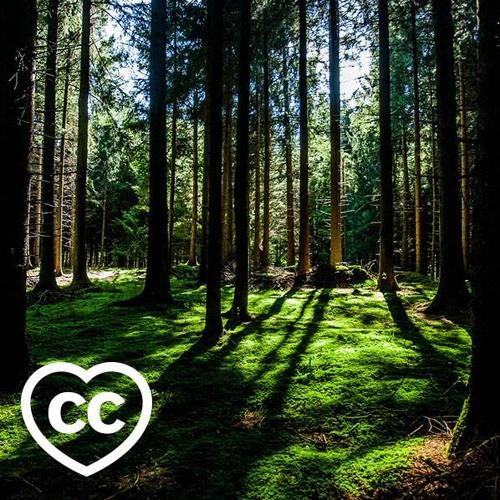 We ♥ creative commons's avatar