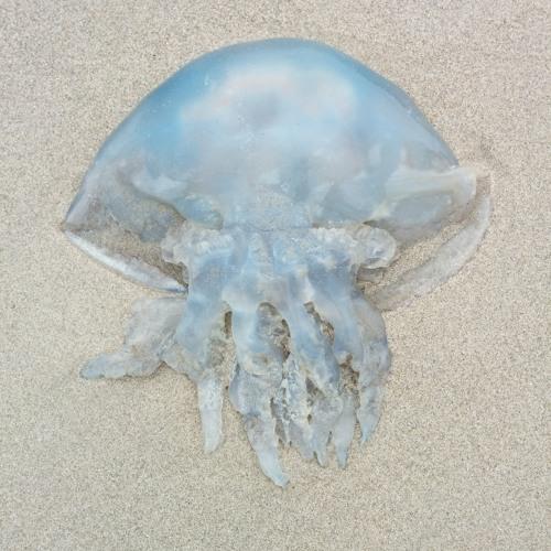 Jellyknees's avatar