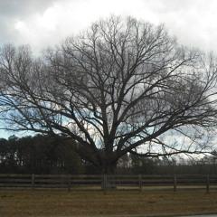 TreeOfLifeDesigns