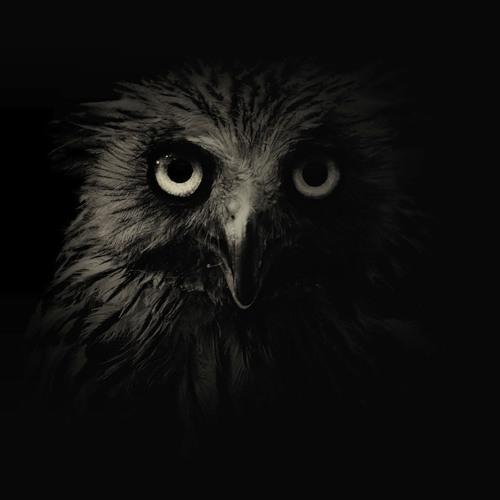 Erlie Bird's avatar