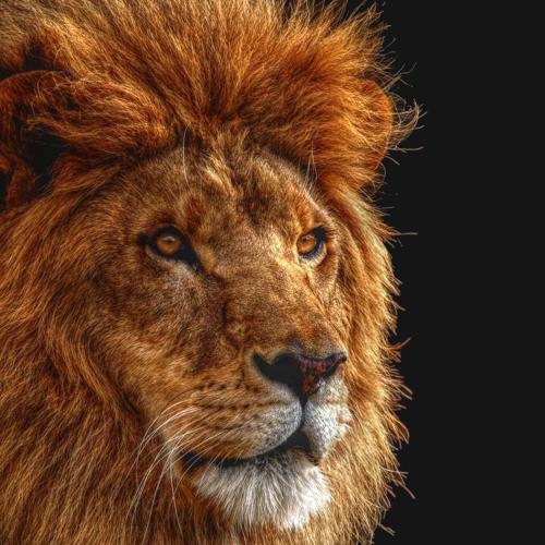 Leonardo Efrati's avatar