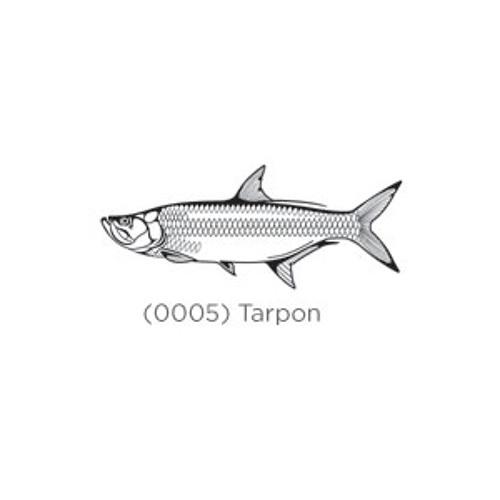 DJ Tarpon's avatar